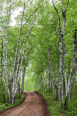 Photograph - Birch Tree Forest Path #4 by Patti Deters