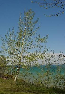 Photograph - Birch Tree Over Lake by Anita Burgermeister
