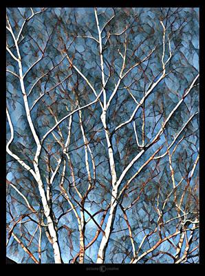 Photograph - Birch Tree by Tim Nyberg