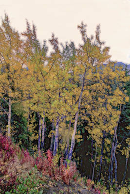 Photograph - Birch Trees #2 by Patricia Dennis