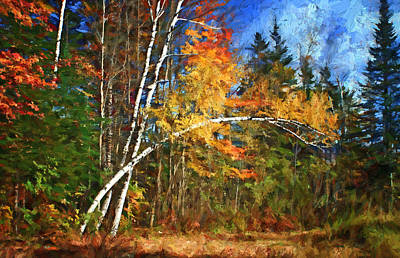 Photograph - Birch Trees - Autumn by Nikolyn McDonald