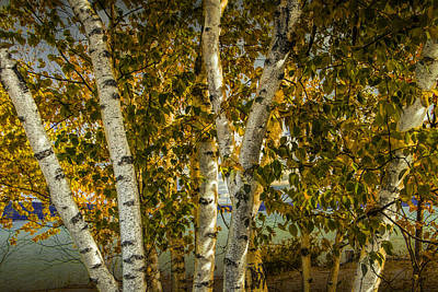 Photograph - Birch Trees By The Shore Of Crystal Lake by Randall Nyhof