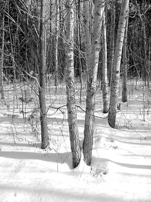 Photograph - Birch Trees by Douglas Pike