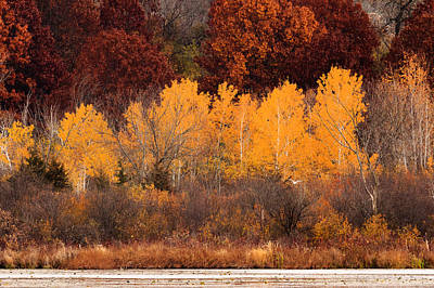 Photograph - Birch Trees In Fall by Joni Eskridge
