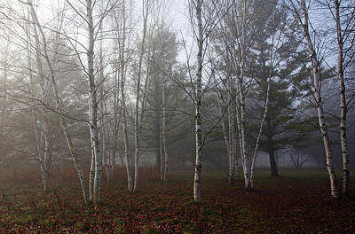 Photograph - Birch Trees In Fog by Debbie Oppermann