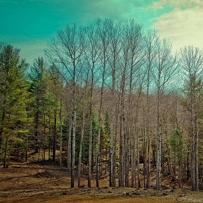 Corporate Art Photograph - Birch Trees In The Spring by David Patterson