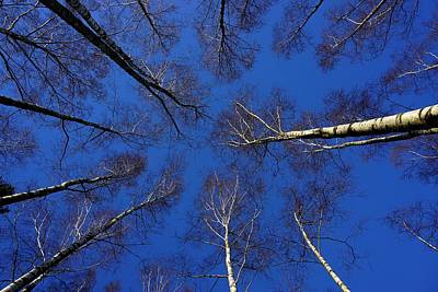 Photograph - Birch Trees In Winter by Richard Stephen