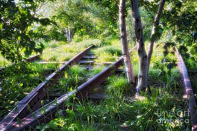 Birch Trees Of High Line Park Art Print