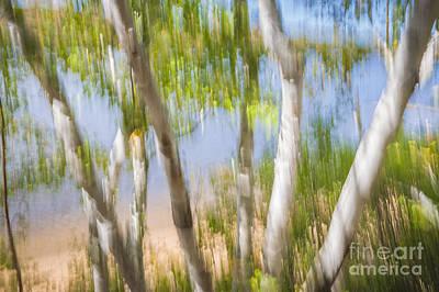 Impressionism Photos - Birch trees on lake shore by Elena Elisseeva