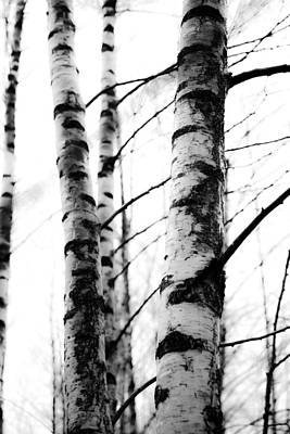 Lush Mixed Media - Birch Trees by Tommytechno Sweden