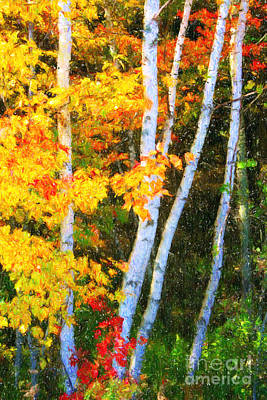 Birch Trees Art Print by Verena Matthew