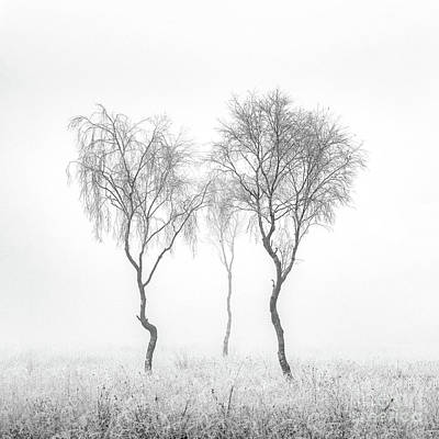 Trees In Winter Photograph - Birch Trio by Janet Burdon