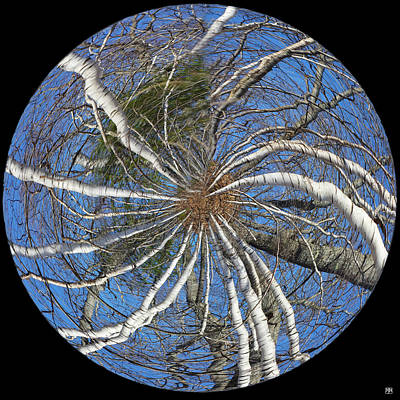 Photograph - Birch Twirl by John Meader