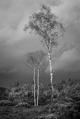 Photograph - Birches And Approaching Rain 2 - Black And White by Alexander Kunz