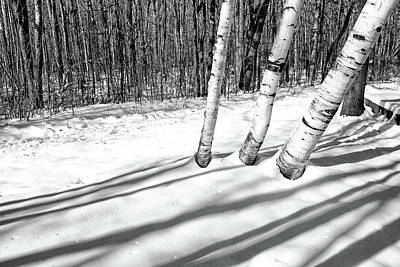 Photograph - Birches And Snow 4 Bw by Mary Bedy