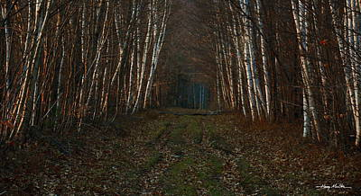 Birches At Blue Hour Art Print by Harry Moulton