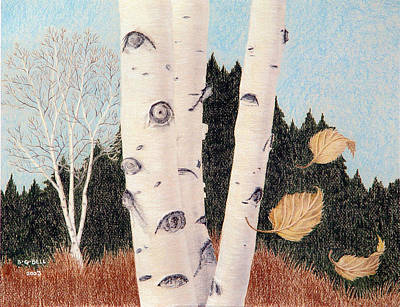 Maine Landscapes Drawing - Birches by Betsy Gray Bell
