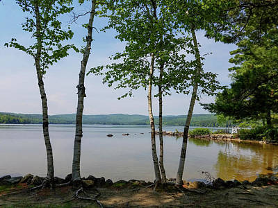 Photograph - Birches On Pleasant Lake by Michael Friedman