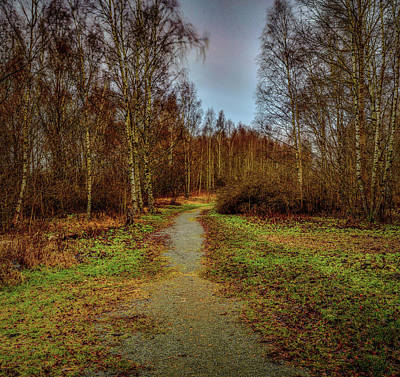 Photograph - Birches Pathway #h0 by Leif Sohlman