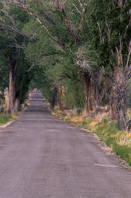 Old Country Roads Photograph - Birchim Lane by Soli Deo Gloria Wilderness And Wildlife Photography