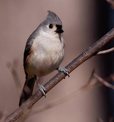 Photograph - Bird 1 by Buddy Scott