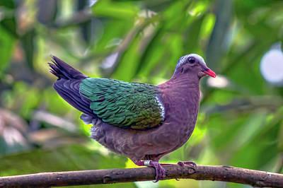 Photograph - Bird 1 by Nadia Sanowar