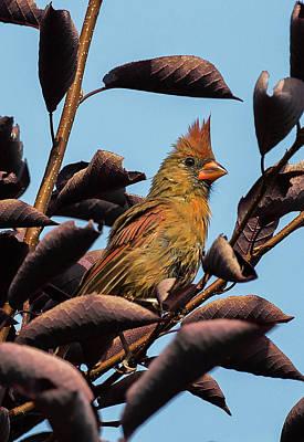 Photograph - Bird 13 by Michel DesRoches
