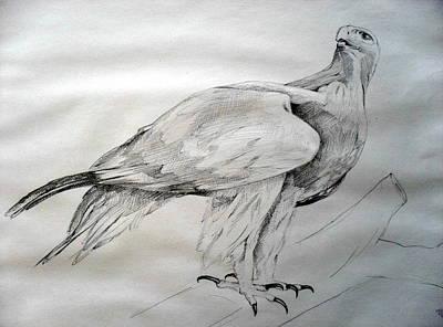 Bird 17 - Eagle Original by Mohd Raza-ul Karim