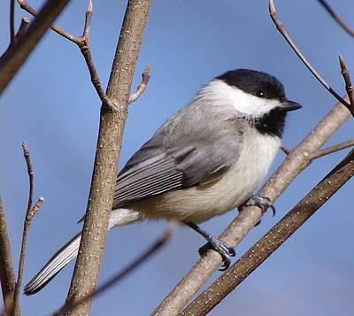 Photograph - Bird 3 by Buddy Scott
