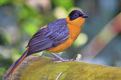 Photograph - Bird 3 by Nadia Sanowar