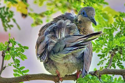 Photograph - Bird 4 by Nadia Sanowar