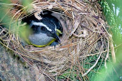 Photograph - Bird 5 by Nadia Sanowar