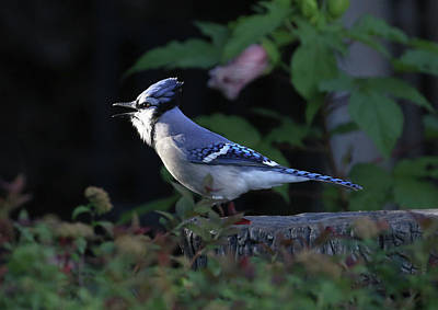 Photograph - Bird 6 by Michel DesRoches