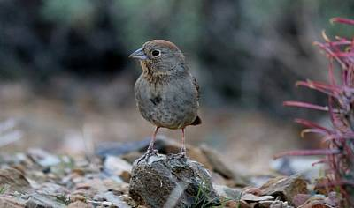 Photograph - Bird 7 by Christy Pooschke