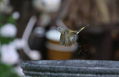 Photograph - Bird 9 by Michel DesRoches