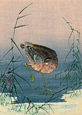 Photograph - Bird Among Reeds 1900 by Padre Art
