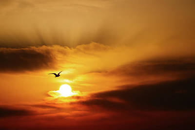 Photograph - Bird And Rays At Sunrise by Roy Cruz