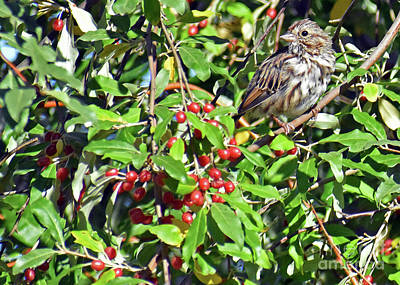 Photograph - Bird And Red Berries by Lydia Holly