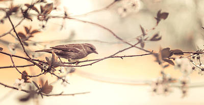 Photograph - Bird And Sakura by Jenny Rainbow