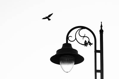 Photograph - Bird And Street Lamp In Black And White by Prakash Ghai