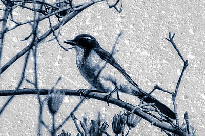 Photograph - Bird And Tree On Rough Surface by Jim Thompson
