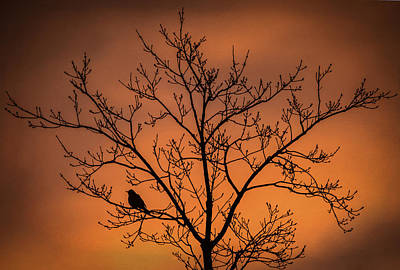 Bird And Tree Silhouette At Dusk Art Print by Terry DeLuco