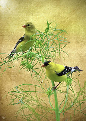 Digital Art - Bird Art - Goldfinch by Ron Grafe