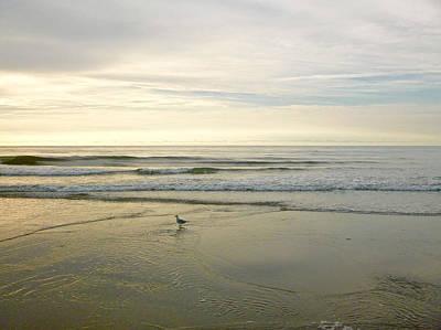 Photograph - Bird At Morning by Ellen Paull
