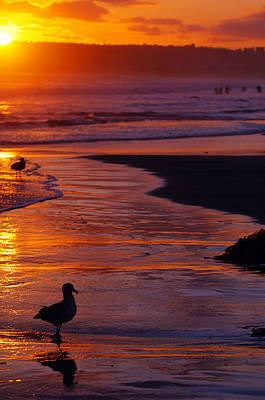 Photograph - Bird At Sunset by Jill Reger