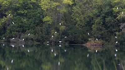 Photograph - Bird Bank   by Ed Waldrop