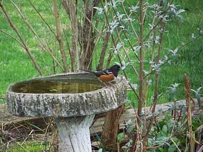 Photograph - Bird Bath by Angi Parks