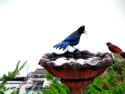 Photograph - Bird Bath Fight by Sadie Reneau
