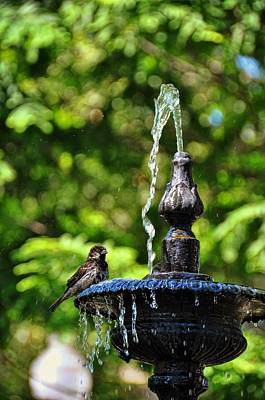 Photograph - Bird Bath by JAMART Photography