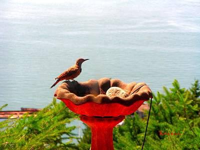 Photograph - Bird Bathing @ Port Of Tacoma Washington by Sadie Reneau
